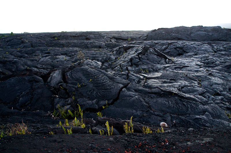 This lava field is only 25 years old! It is not often that we can walk on ground that's younger than us.