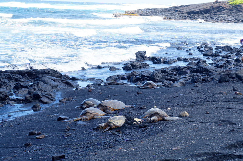How beautiful is the sight of a group of turtles resting on a black sand beach? We heard that they come out here every day which means that most people must give them their space otherwise they would not be coming back.