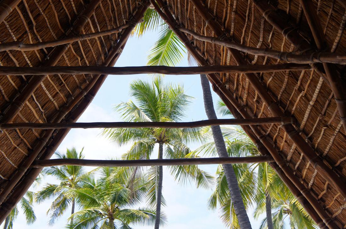 Green palm trees and halau structures at Puʻuhonua O Hōnaunau.