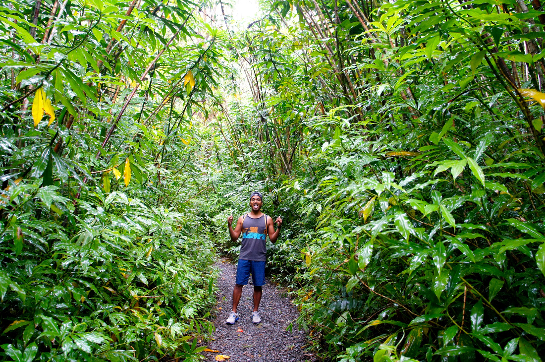Walking on this trail after the rain was a real treat. Trees were covered in droplets of water and the entire jungle looked very mystical.