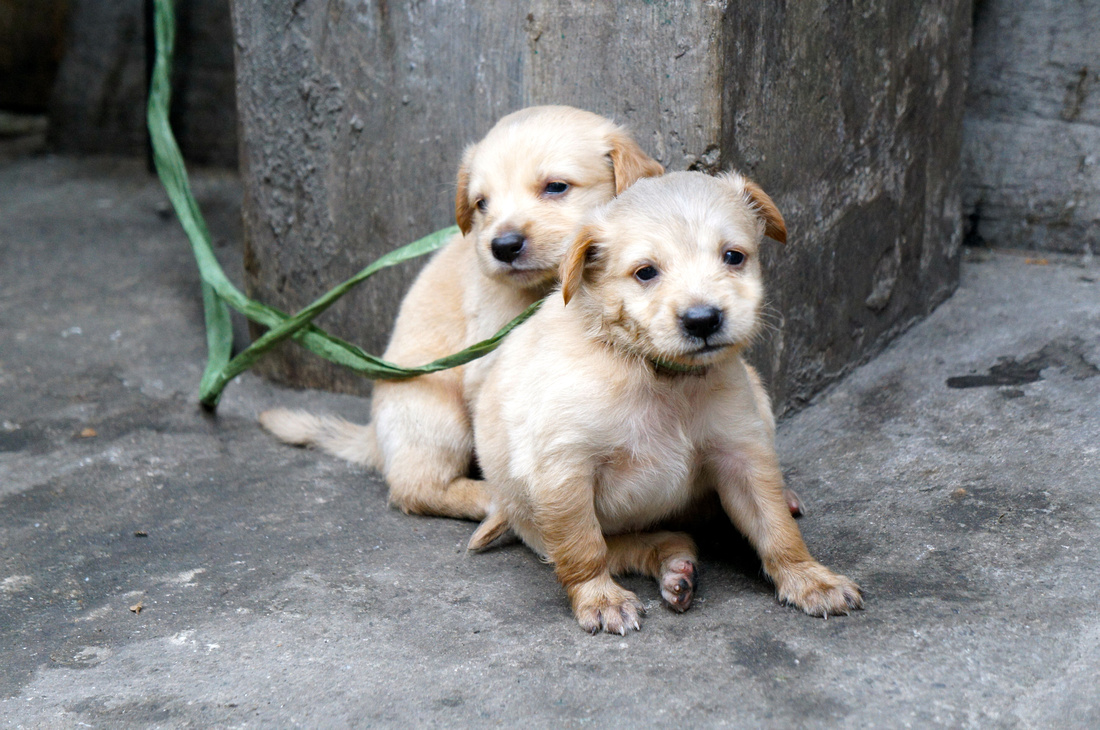 Cute puppies on the streets of Manila