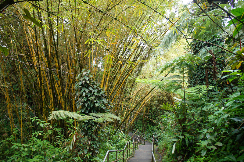 The hike to Akaka Falls is pretty easy and suitable for families and even older people. The whole path is paved and very safe.