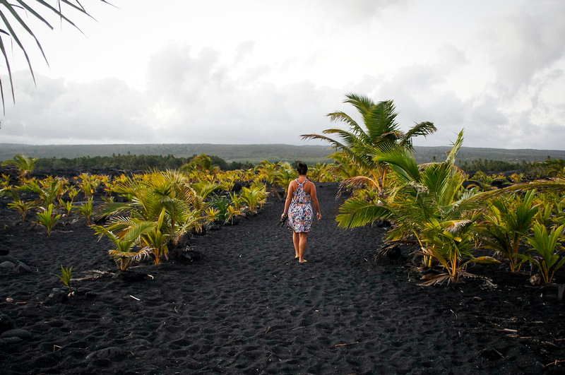 Small palm trees were planted by locals to make the New Kaimu beach look more like the original one. The green leaves contrast beautifully with the black sand.