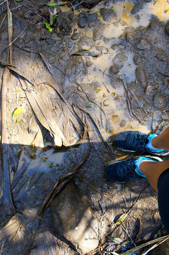 Muddy Kalalau trail to Hanakapiai Falls
