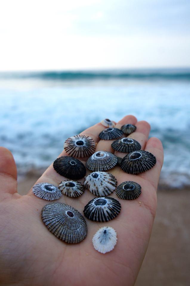 Shells found on Secret Beach in Kauai, Hawaii