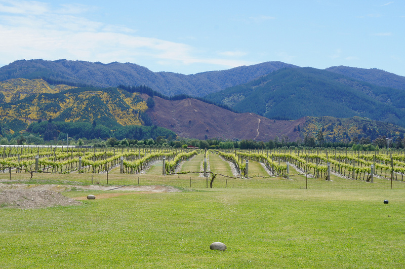South Island of New Zealand is known for its wineries