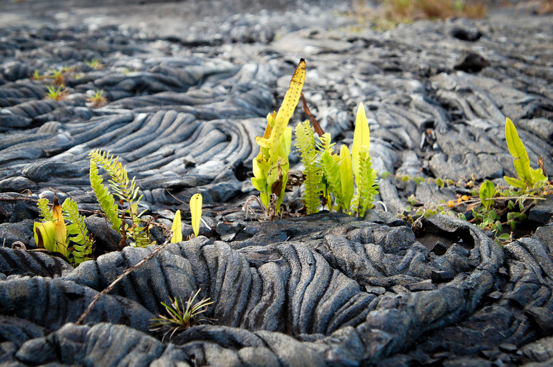 Vegetation can take over lava fields pretty quickly. How beautiful is the contrast of green plants with the black lava field?